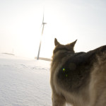 Dog &amp; Turbines